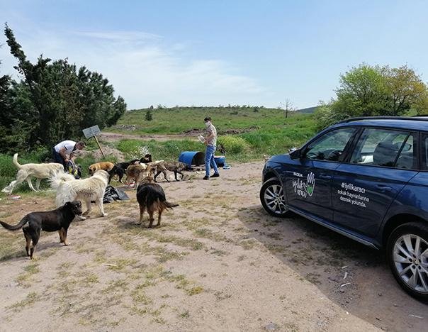 Škoda İyilik Araçları Sokak Hayvanlarını Unutmadı
